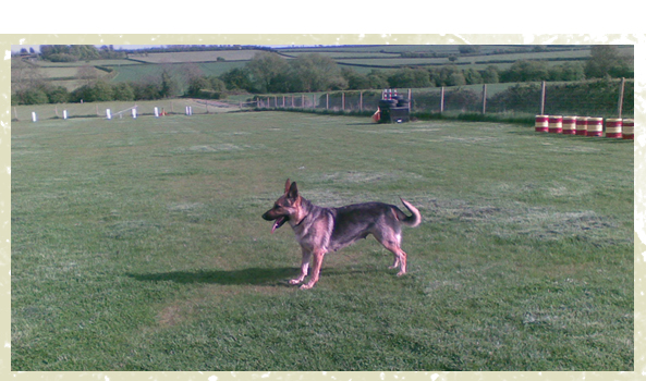 Dog Training - Milton Keynes, Buckinghamshire - Villiers Farm Kennels & Cattery - training dog<br />